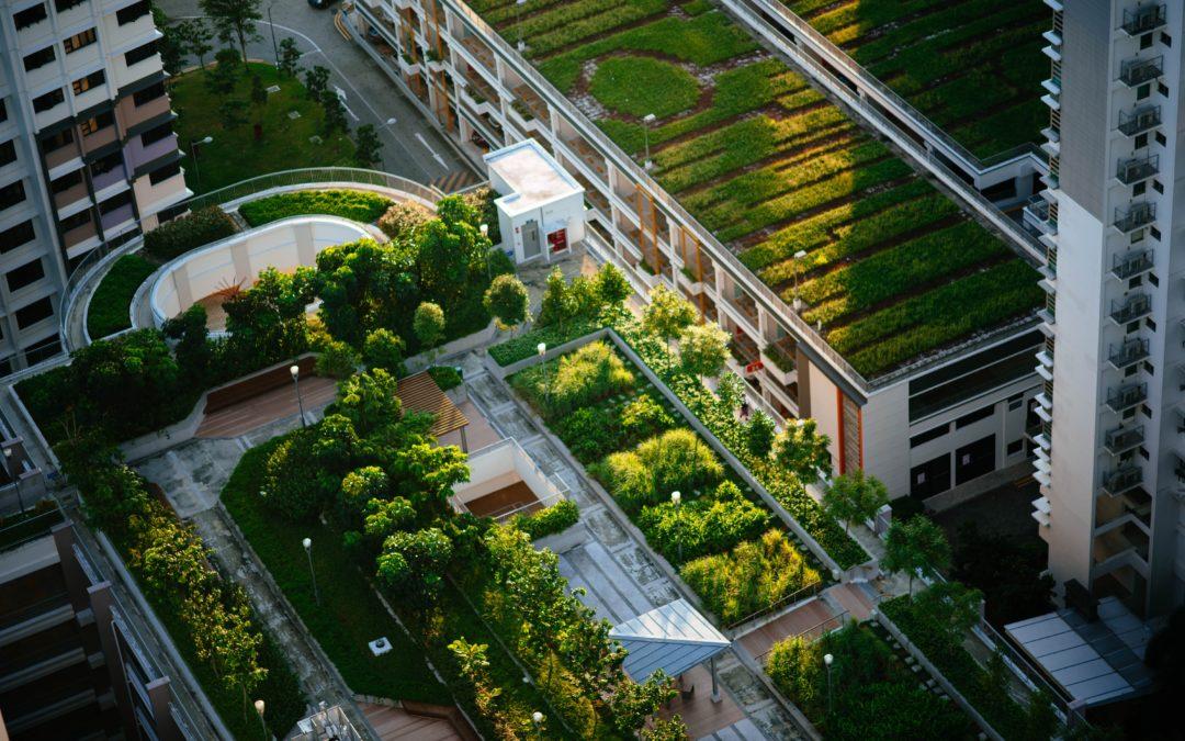 Urban Gardening: Der Schlüssel zu nachhaltigeren und grüneren Städten?